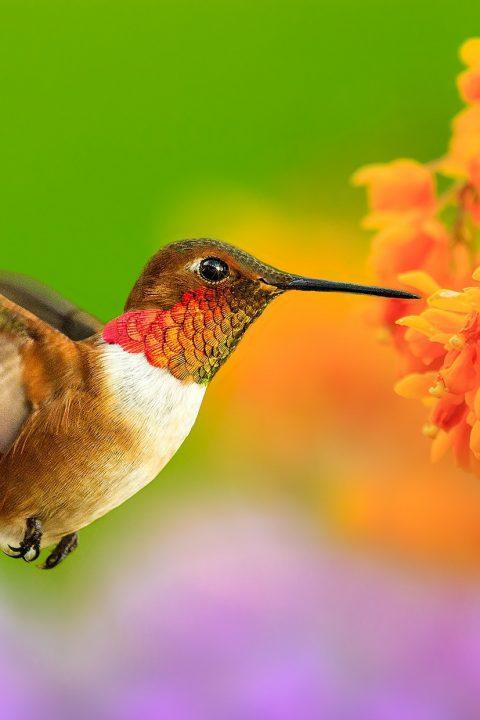 Episódio 1: Por que as aves e as flores são mais felizes do que eu?!