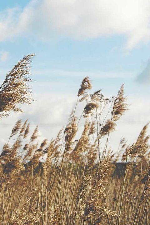 Episódio 5: HUAH – O Vento de Deus